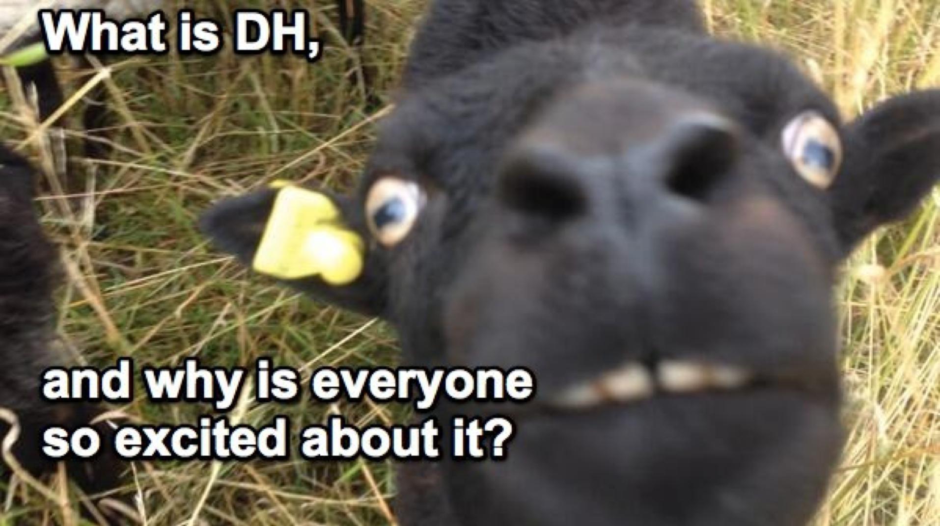 DH Sheep