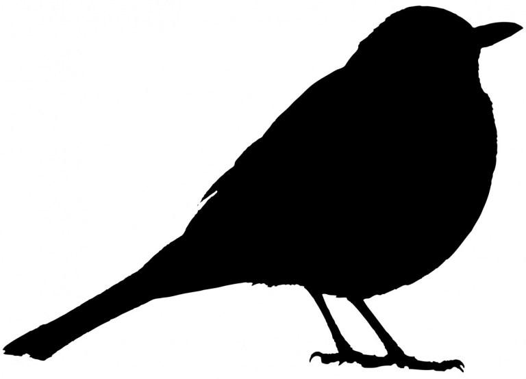 Outline of a blackbird